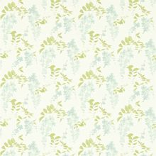 Обои Chika Wisteria Blossom 213741